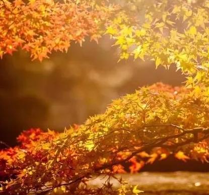 秋高气爽,这些描写秋天的成语可以用起来了!看看你知道多少?